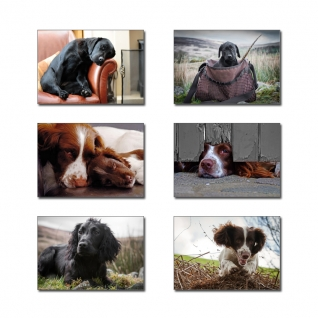 country-working-dogs-placemats__318